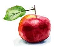 在白色隔绝的手拉的红色苹果 免版税库存照片