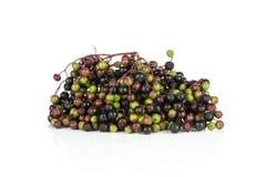在白色隔绝的新鲜的欧洲黑接骨木浆果 免版税库存图片