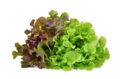 在白色隔绝的新鲜的红色和绿色橡木莴苣沙拉叶子 免版税库存图片