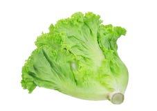 在白色隔绝的新鲜的绿色橡木莴苣沙拉叶子 免版税库存照片