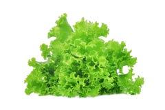 在白色隔绝的新鲜的绿色橡木莴苣沙拉叶子 图库摄影