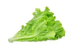 在白色隔绝的新鲜的绿色莴苣沙拉叶子 免版税库存照片