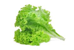 在白色隔绝的新鲜的绿色莴苣沙拉叶子 免版税库存图片