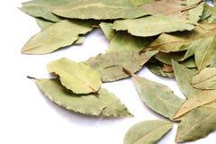 在白色隔绝的月桂树叶子 免版税图库摄影