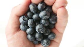 在白色隔绝的极少数新近地摘的蓝莓 股票视频