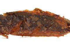 在白色隔绝的深被射击的鲶鱼 免版税库存图片
