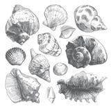 在白色隔绝的灰色乱画贝壳剪影 库存例证