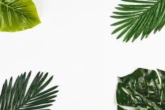 在白色隔绝的热带叶子框架 免版税库存照片
