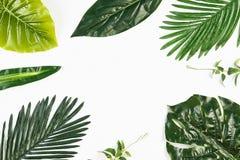在白色隔绝的热带叶子框架 图库摄影