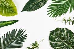在白色隔绝的热带叶子框架 免版税库存图片