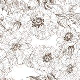 在白色隔绝的狂放的玫瑰开花分支的无缝的样式 葡萄酒植物的手拉的例证 春天 库存例证