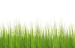 在白色隔绝的绿色长的草 免版税库存照片