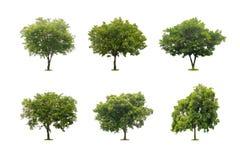 在白色隔绝的美丽的绿色树的汇集 库存照片