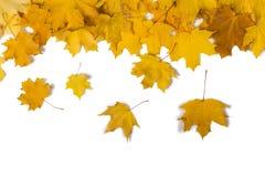 在白色隔绝的色的落的叶子秋天卡片  库存图片