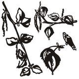 在白色隔绝的设置手拉的桦树分支 向量例证