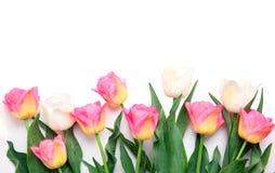 在白色隔绝的郁金香花 边界框架背景 库存图片