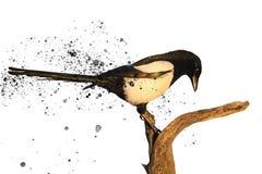 在白色隔绝的鹊和飞溅 免版税库存照片