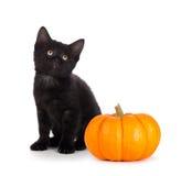 在白色隔绝的一个微型南瓜旁边的逗人喜爱的黑小猫 图库摄影