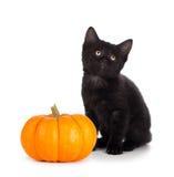 在白色隔绝的一个微型南瓜旁边的逗人喜爱的黑小猫 库存照片