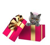在白色隔绝的一个桃红色当前箱子的逗人喜爱的猫 免版税库存图片