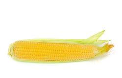 在白色隔绝的一个玉米穗 库存照片