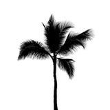 在白色隔绝的一棵可可椰子树黑剪影  免版税库存照片