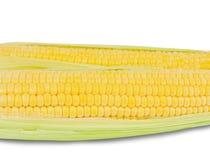 在白色隔绝的两个玉米穗 免版税库存照片