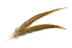 在白色隔绝的两根棕色羽毛 免版税库存照片