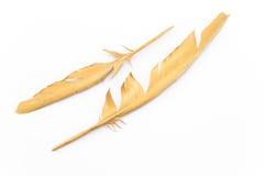 在白色隔绝的两根金羽毛 库存照片