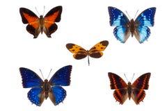 在白色隔绝的五只非洲蝴蝶的汇集 免版税库存图片