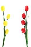 在白色隔绝的人为红色和黄色郁金香束 库存照片