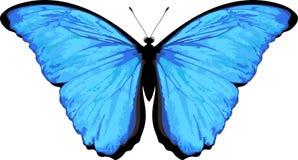 在白色隔绝的传染媒介蝴蝶 Morpho rhetenor 皇族释放例证