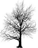 在白色隔绝的光秃的树剪影 库存照片