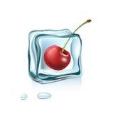 在白色隔绝的冰块的樱桃 库存图片