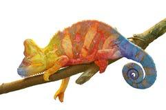 在白色隔绝的分支的变色蜥蜴 免版税库存照片