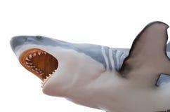 在白色隔绝的剧烈大白鲨鱼 库存图片