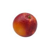 在白色隔绝的唯一五颜六色的红色西西里人的桔子 库存图片