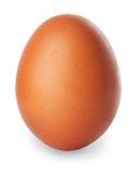 在白色隔绝的唯一棕色鸡鸡蛋 库存照片