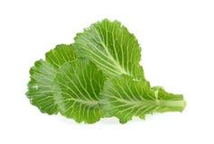 在白色隔绝的圆白菜叶子 免版税库存图片
