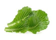 在白色隔绝的圆白菜叶子 库存图片