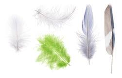 在白色隔绝的套五根颜色羽毛 免版税图库摄影