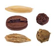 在白色隔绝的套五颗种子 库存图片