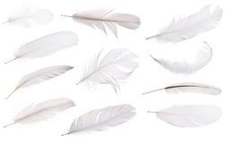 在白色隔绝的套十一根浅灰色的羽毛 免版税库存照片