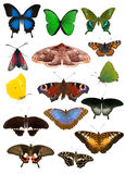 在白色隔绝的套十五只蝴蝶 免版税库存图片