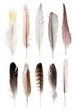在白色隔绝的套十根平直的羽毛 库存图片