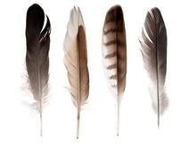在白色隔绝的套四根平直的羽毛 库存照片