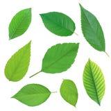 在白色隔绝的套美丽的绿色春天叶子 库存图片