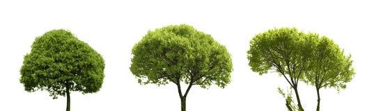 在白色隔绝的套色的剪影树 库存图片