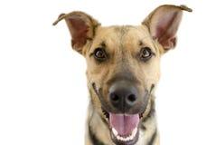 在白色隔绝的愉快的狗 免版税库存照片