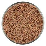 在白色隔绝的扁豆 免版税库存照片